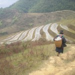 South East Asia: A rice ingrained culture