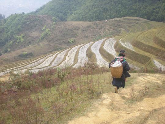 Rice Terraces Sapa Vietnam