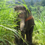 Elephant Sanctuaries
