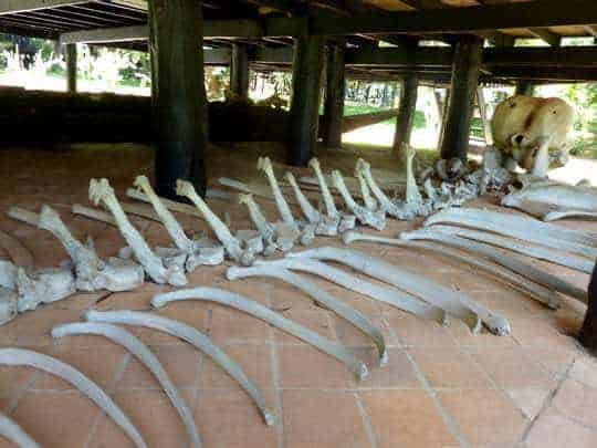 The entire skeleton of an elephant at The Black House
