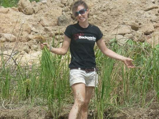 Hard, muddy work rice planting in Chiang Mai