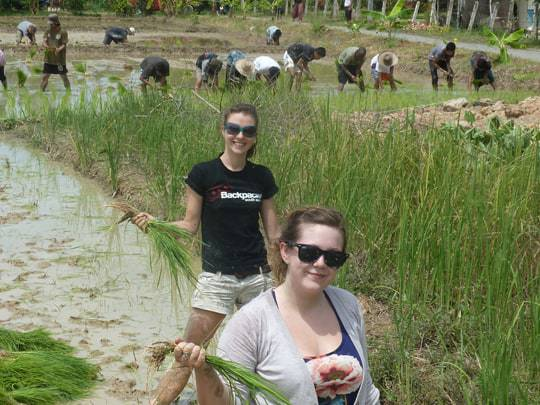 The S.E.A Backpacker Team Rice planting in Chiang Mai