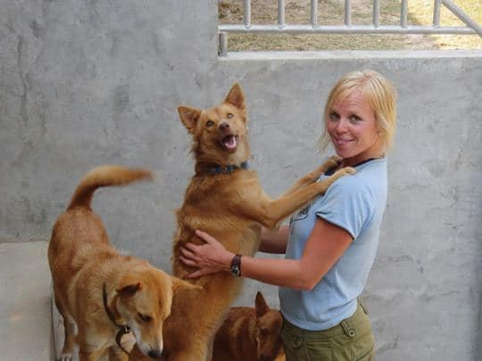 Happy, healthy dogs at Lanta Animal Welfare