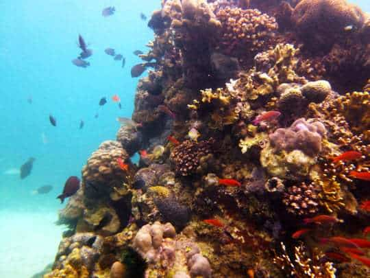 The colourful corals of Puerto Galera