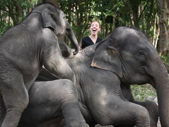 Visit an Elephant Sanctuary in Chiang Mai, Thailand