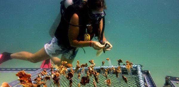 coral nursery building Tourist Hotspots