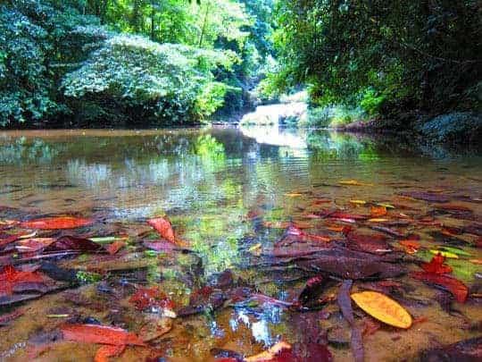 Andamans rainforest waterway