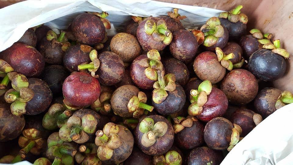 Mangosteen - the Queen of Fruits.