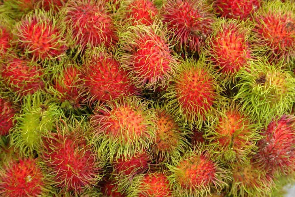 The hairy Rambutan Fruit