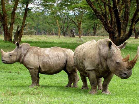 Rhinos Chitwan National Park
