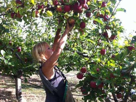 Working Down Under Fruit picking