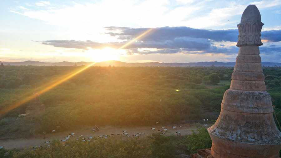 The sun sets over Bagan, Myanmar as a herd of goats stroll by.