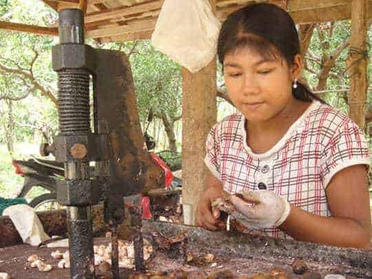 A Thai Lady Roasts Cashew Nuts in Koh Phayam