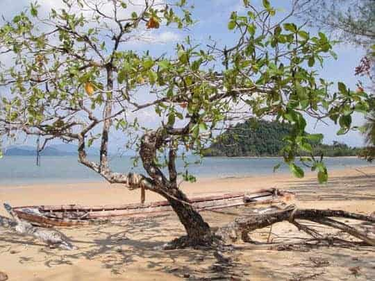 A Tree on the Beach in Koh Phayam