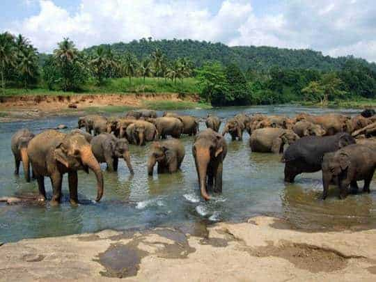elephants-sri-lanka