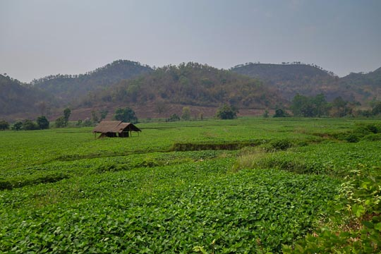 Green Hsipaw Farmland