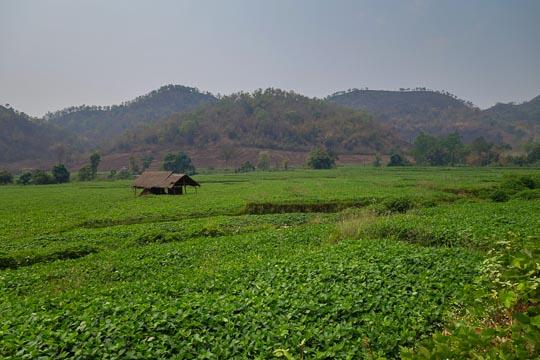 Hsipaw Farmland