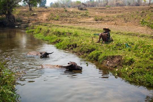 Hsipaw Farmer