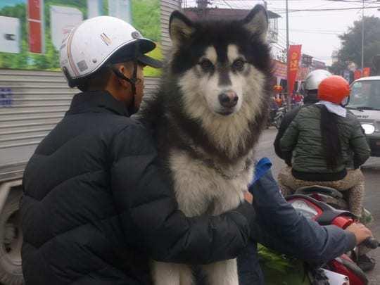 Photo 2 - Dog Warmer