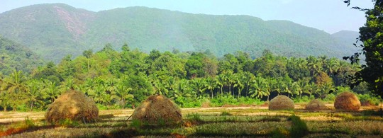 Green Farmland in Southern Goa