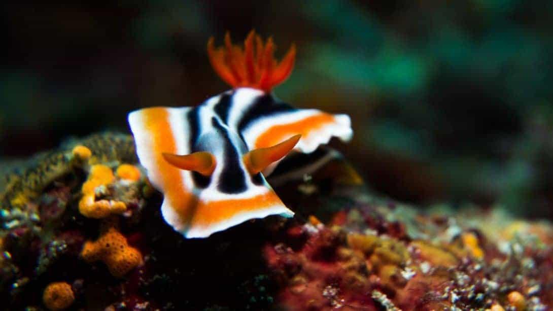 Nudibranch (sea slug) spotted whilst diving.
