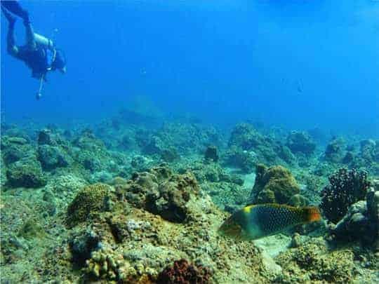 Myanmar diving