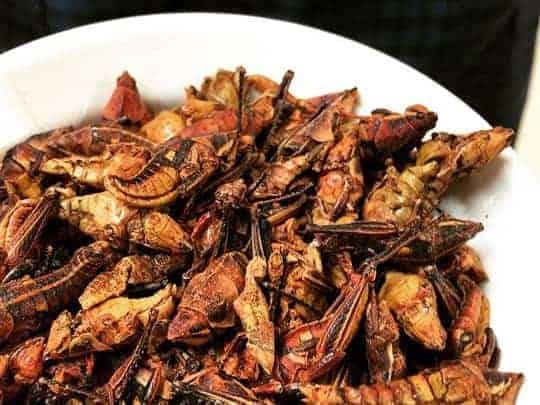 Mole crickets
