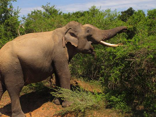 Elephants Sri Lanka Tourist Hotspots