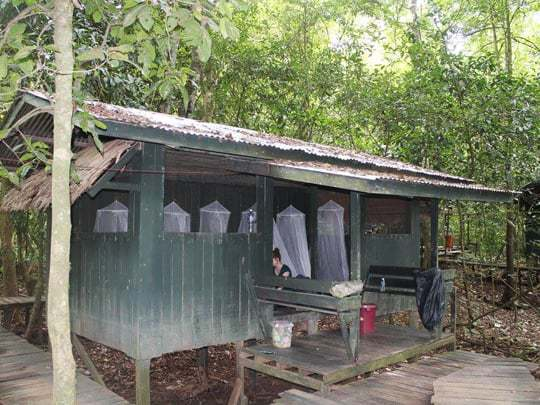 Jungle Refuge