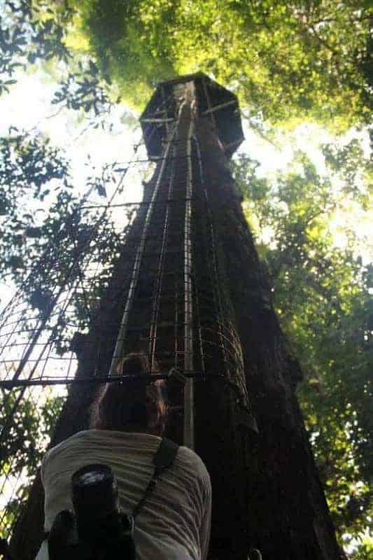 Rainforest Tree Jungle Ladder
