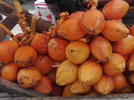 coconuts-sri-lanka
