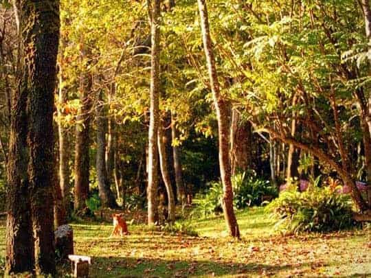 A Forest Scene in Doi Suthep