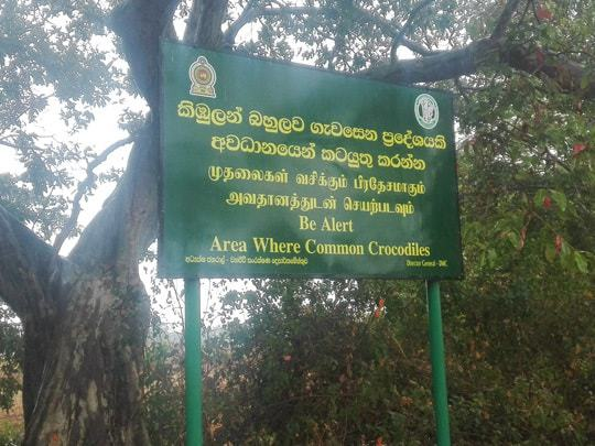 animals-3 Sri Lanka