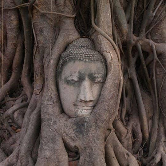 Sukhothai Vs Ayutthaya Buddha's head entwined in the roots of a bodhi tree at Wat Mahathat, Ayutthaya.
