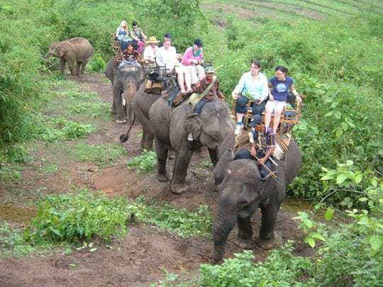 Travel eco-friendly. Say NO to elephant riding in Thailand!