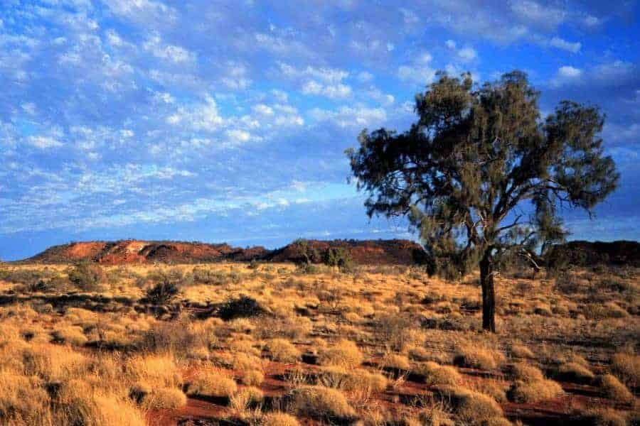 A single tree in a barren landscape in Australialia