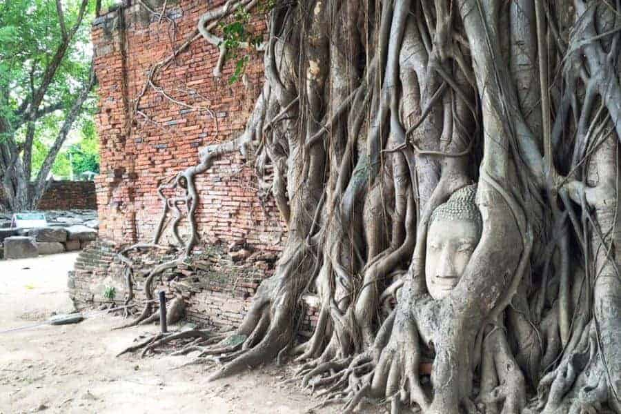 Buddha's head in a bodhi tree at Ayutthaya
