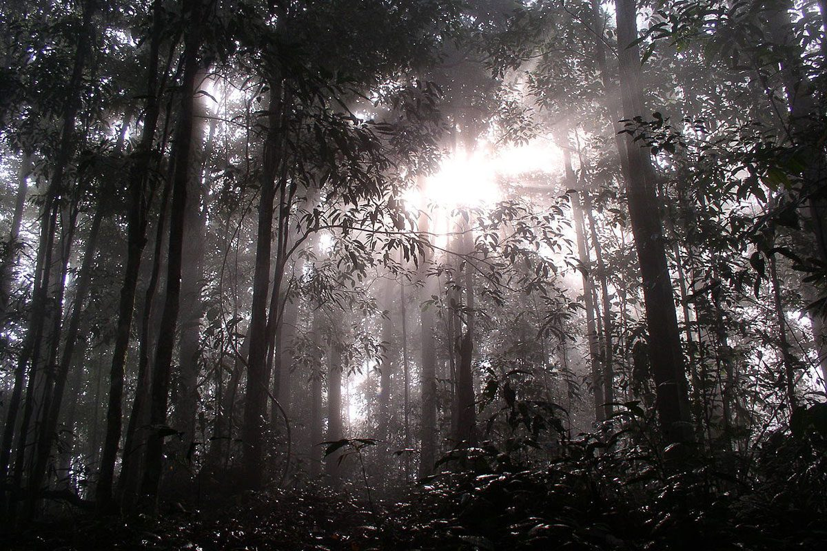Into the Jungle… Sabah, Malaysian Borneo