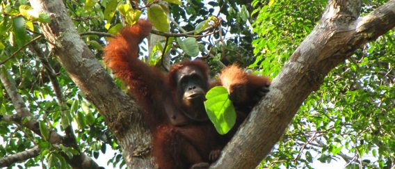 Head to Malaysian Borneo…