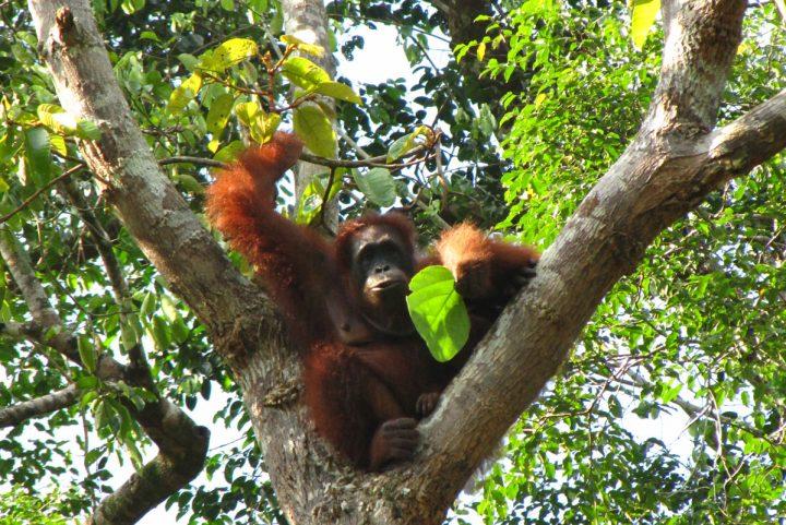 Head to Malaysian Borneo…