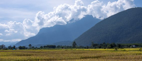 Chiang Dao (Bird Watcher's Paradise)