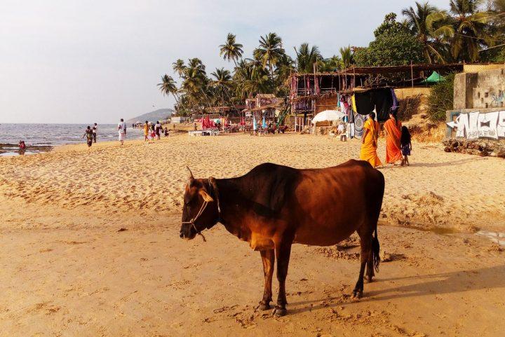 """<span class=""""hot"""">Hot <i class=""""fa fa-bolt""""></i></span> Goa, India (Ex-Portuguese Colony with Hippie Vibes)"""