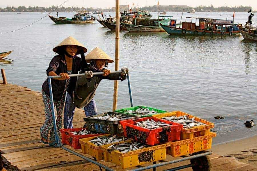 Vietnamese women push a trolley of fish at the docks, Hoi An