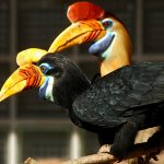 Sarawak Overview (Land of the Hornbills)