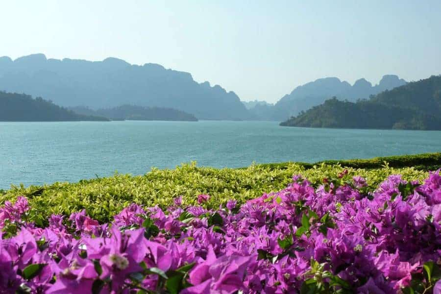 Purple flowers in the foreground, water and hills in the background. Khao Sok National Park