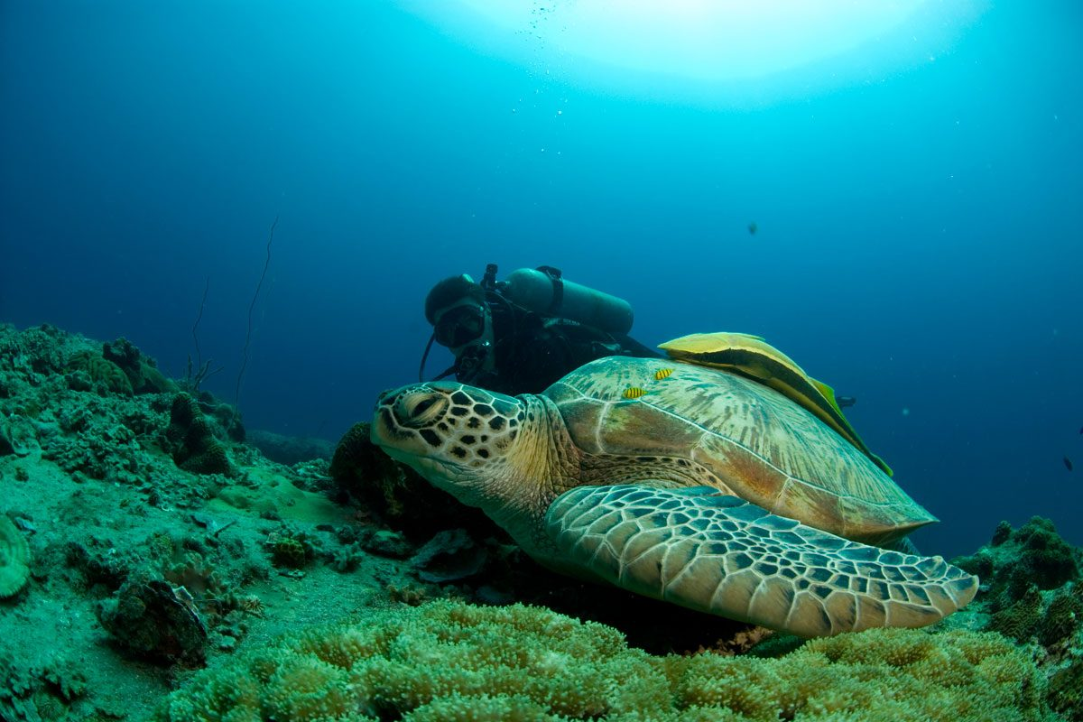 Koh tao dive site guide south east asia backpacker - Koh tao dive sites ...