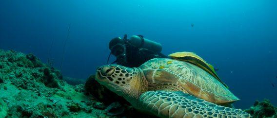 Koh Tao Dive Site Guide (explore the underwater world)
