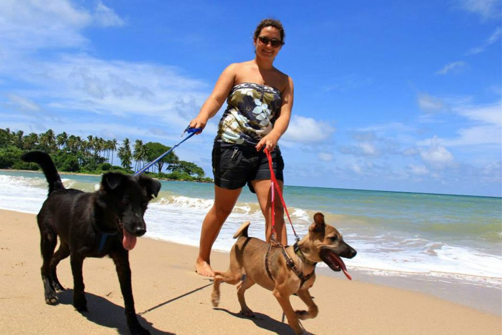 Dog walking on the beach. Volunteering with Lanta Animal Welfare, South Thailand.