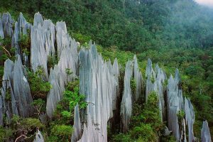 Mulu Pinnacles Gunung Mulu National Park