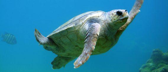 Pulau Weh (Diving & Island Life)